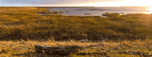 Canon paisaje duplicador