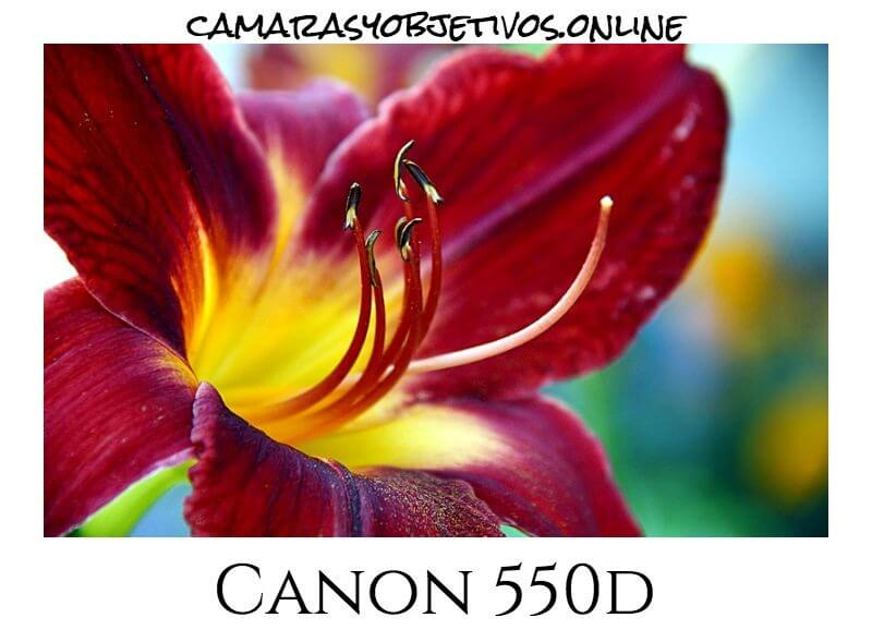 Imagen para Canon cámara 550 d
